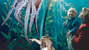 Pier 39 Attractions Bay Cruises Shopping Guide San Francisco 39 S Favorite And Most Popular